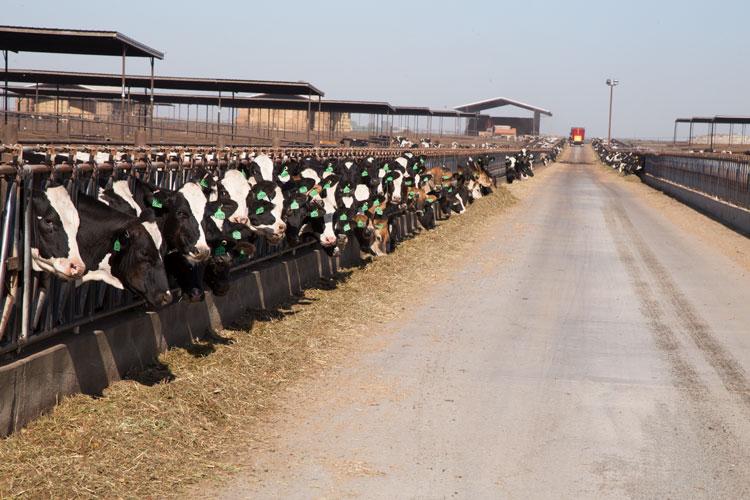 Bigger farms have a size advantage
