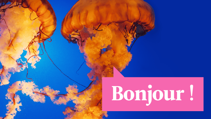 6 Common Animal Names That Sound Way Cooler In French