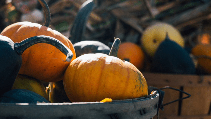 Quintessential Fall — How Other Countries Celebrate Autumn