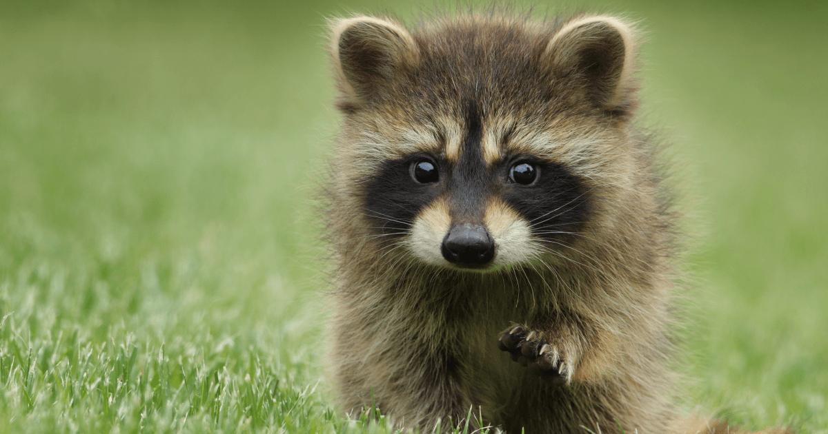 Learn German Animal Names With This Useful Flowchart   Babbel Magazine