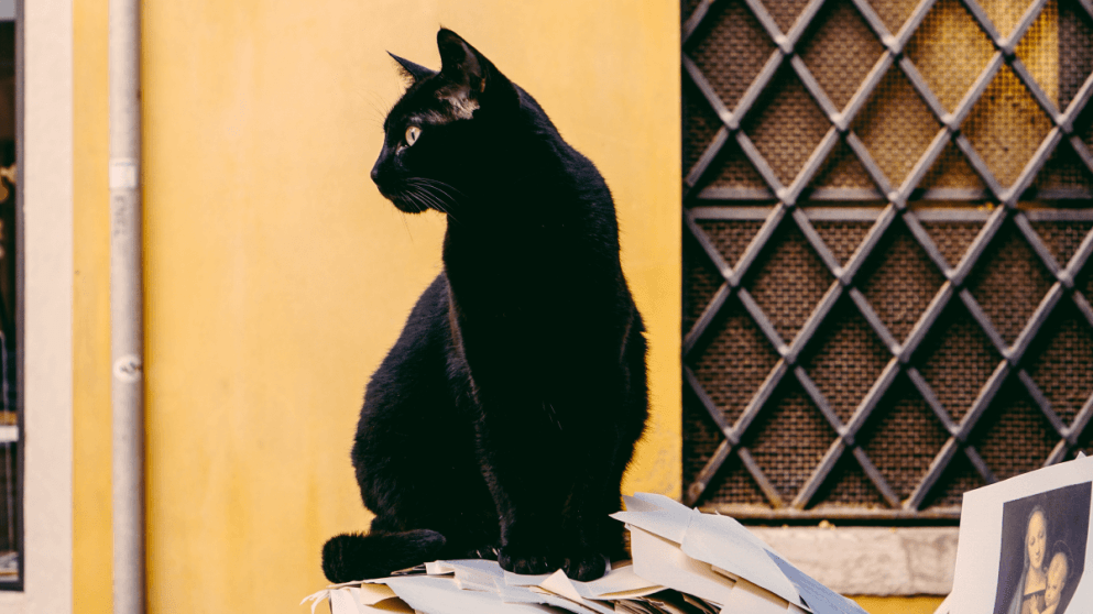 13 Foreign Phrases That Are Rooted In Superstition