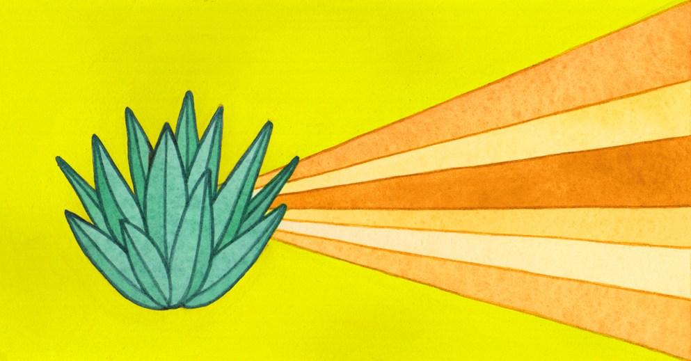 Mescal VS Tequila: conoscete davvero la differenza tra queste due famosissime bevande messicane?