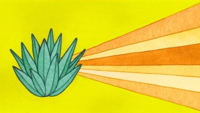 Tequila und Mezcal: Was ist der Unterschied?