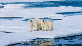 Environnement et néologismes : quel est l'impact linguistique du changement climatique ?