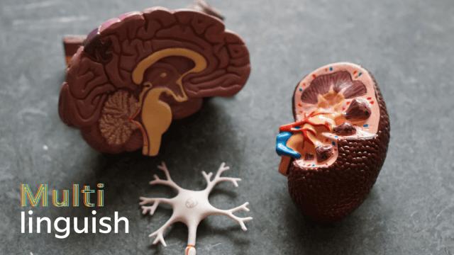 Multilinguish: Your Brain On Language
