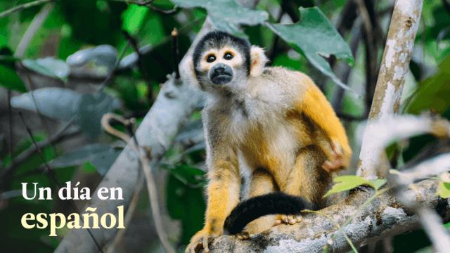 Un Día En Español 11: Journey To Monkey Island