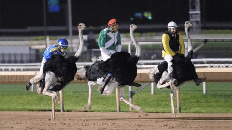 11 Weird Sports From Around The World