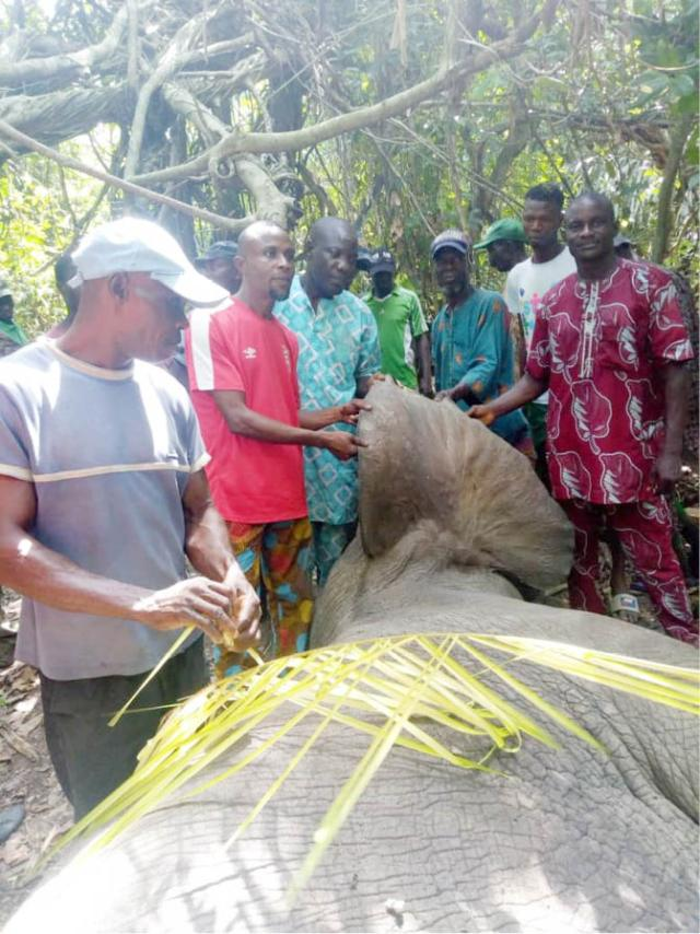 Locals sorround the dead elephant which was reportedly shot on Monday but died on Friday