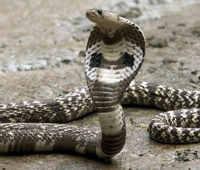 The World Health Organization Is Deeply Worried About Snake Bites