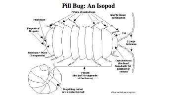 Pill-bug-sofrep-navy-seals