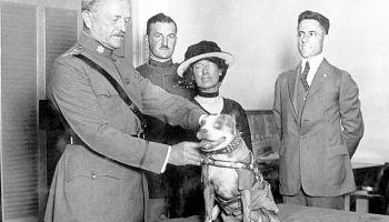 Sergeant Stubby: The Original Dog Of War