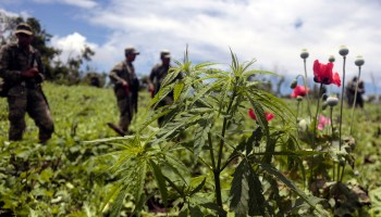 Is Legal Pot Crippling the Cartels?