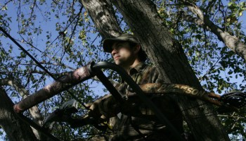Choosing a Tree Stand
