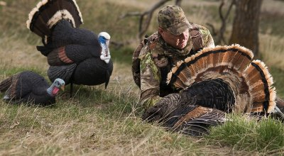 Turkey Hunting (Pt.3): Decoys