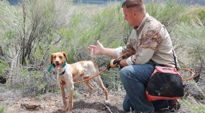 Hunting Dog Behaviors and Training Principles