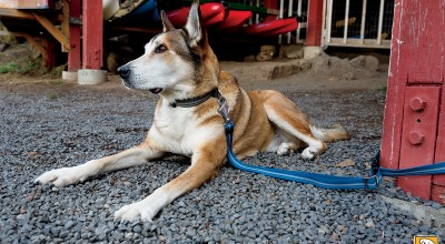 A Leash and Collar That Improve Dog Training