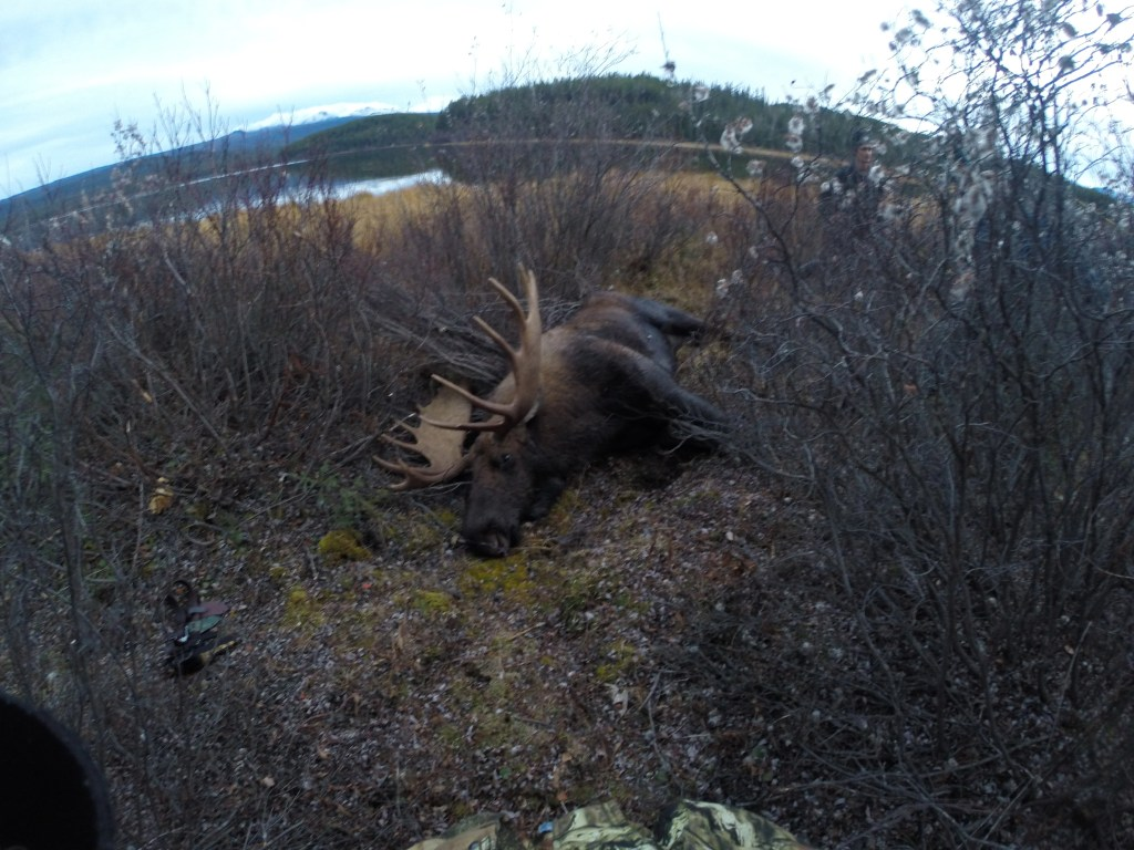 Hunting Trophy Moose in Northern British Columbia