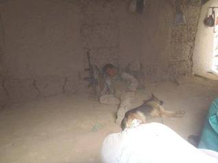 """SARC and his fellow Marine military working dog """"TAZ"""" resting prior to patrol."""