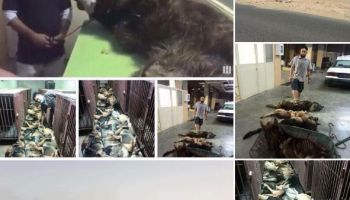 Update to dozens of working dogs massacred by Eastern Securities in Kuwait