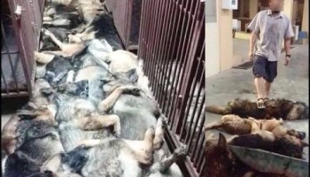Dead military working dogs piled up like trash after contract terminated in Kuwait