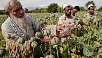Taliban Seeking New Financing As Drug Trade Suffers