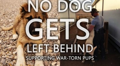 Non-profit reunites dogs and service members who met overseas