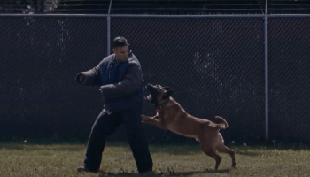Watch: Military Working Dog Practices His Attacks