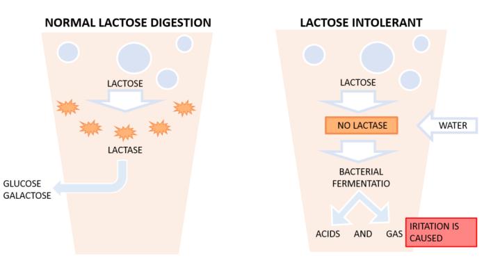 cliomakeup-intolleranza-lattosio-digestione-avversa-6