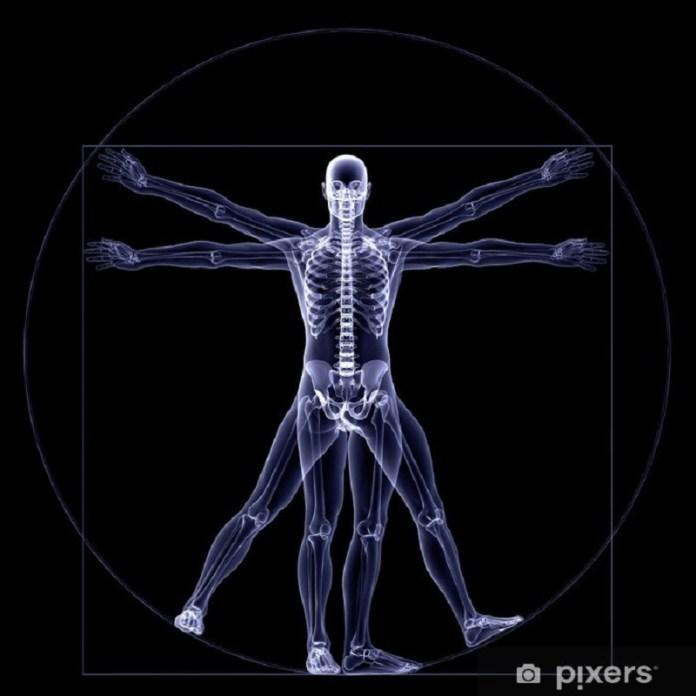cliomakeup-prevenzione-osteoporosi-2-scheletro.jpg