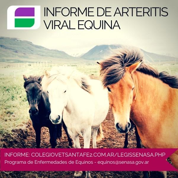 Informe de arteritis viral equina