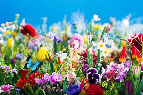 蜷川實花最新個展「earthly flowers, heavenly colors」東京開催