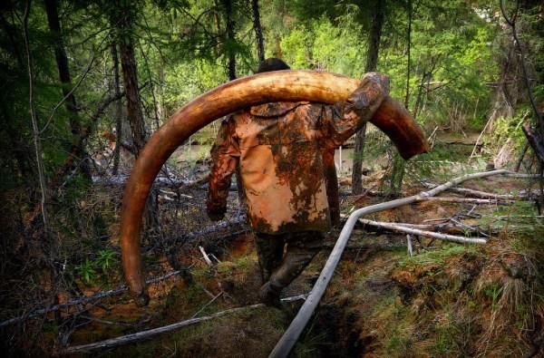 Охотники за мамонтами (25 фото) » Невседома - жизнь полна ...