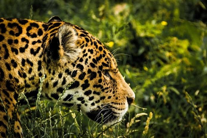 Jaguar Health JAGX Stock News