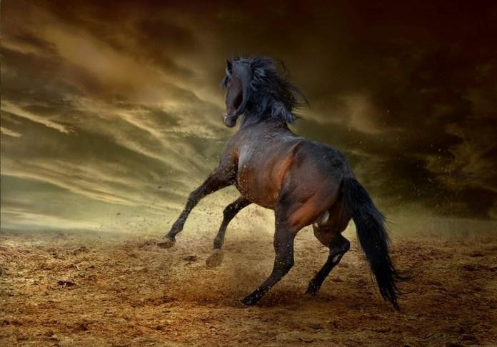 Mustang Bio MBIO Stock News