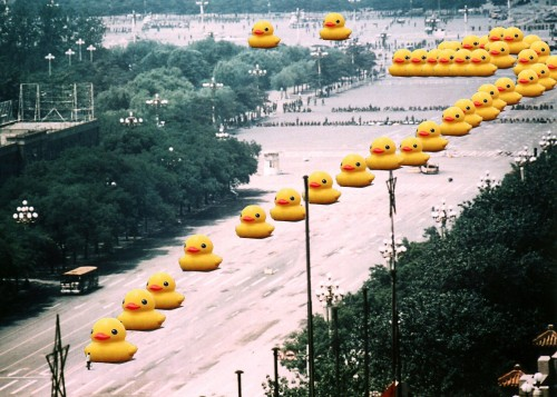Big Yellow Ducks at Tiananmen Square