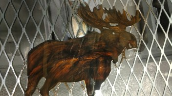 moose welcome black dye and color cast paint
