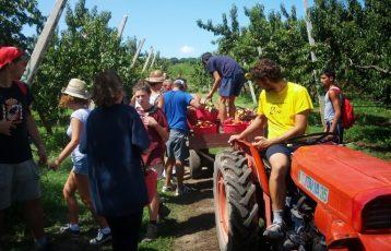 scout CNGEI e LIBERA - lavoro nei campi 2