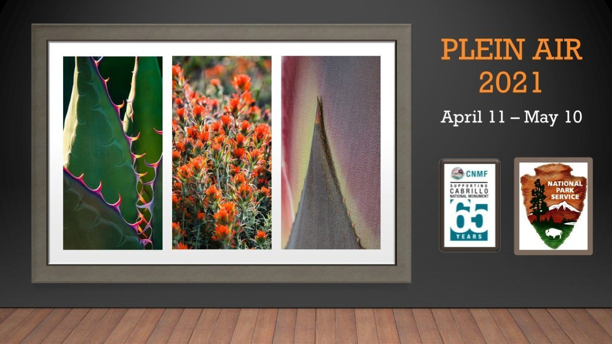 "3 photographs in a frame hang on the wall of a gallery with wood floors. Left: A spiny, vibrant green and rigid plant with colorful spikes; Center: A fluffy green plant with bright red-orange flowers; Right: a triangular-shaped leaf in muted pinks and greens. A title to the right reads ""Plein Air 2021: April 11 - May 10""."