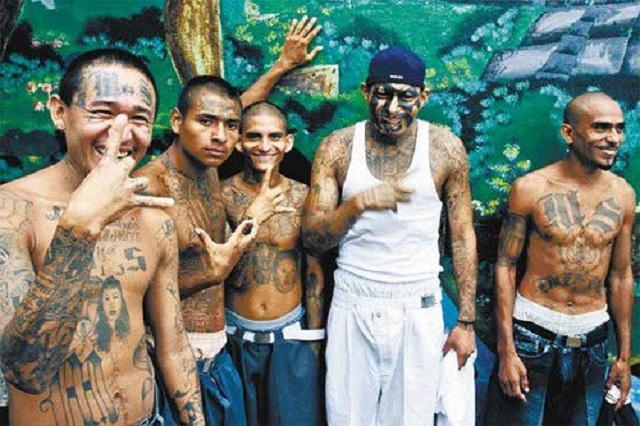 Image result for m13 gang among DACA