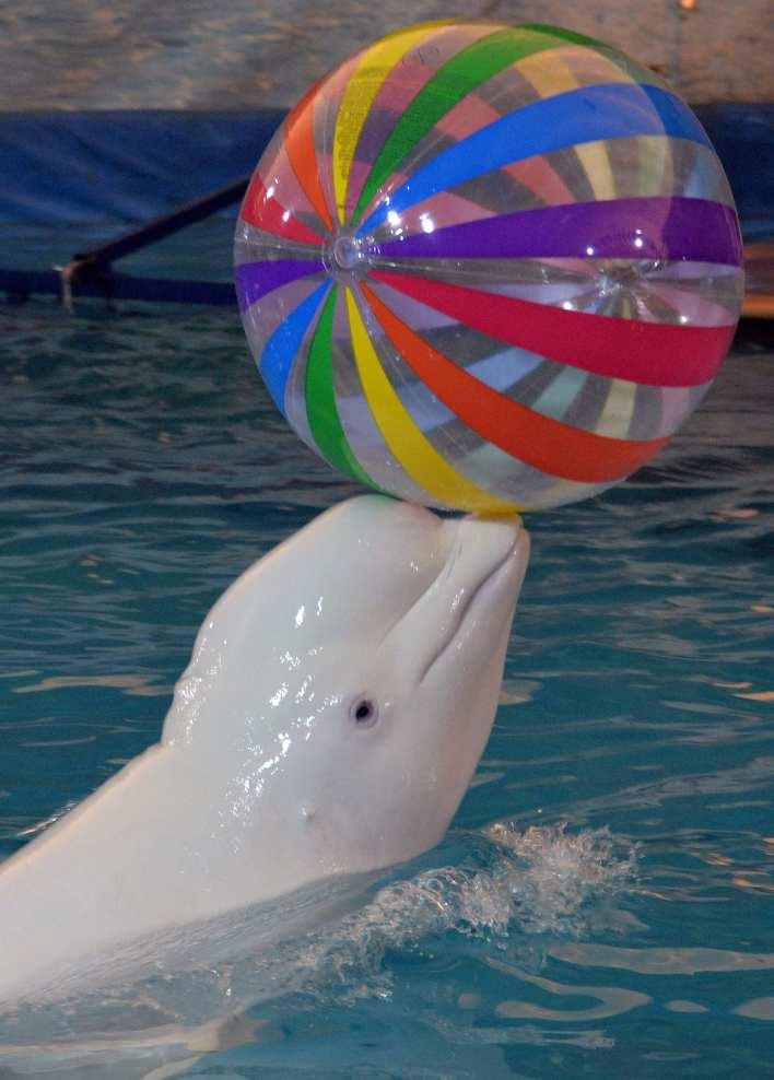 """""""مفترس لا يرحم"""".. تعرف على الحوت السائر المسمى على اسم إله الموت المصري"""