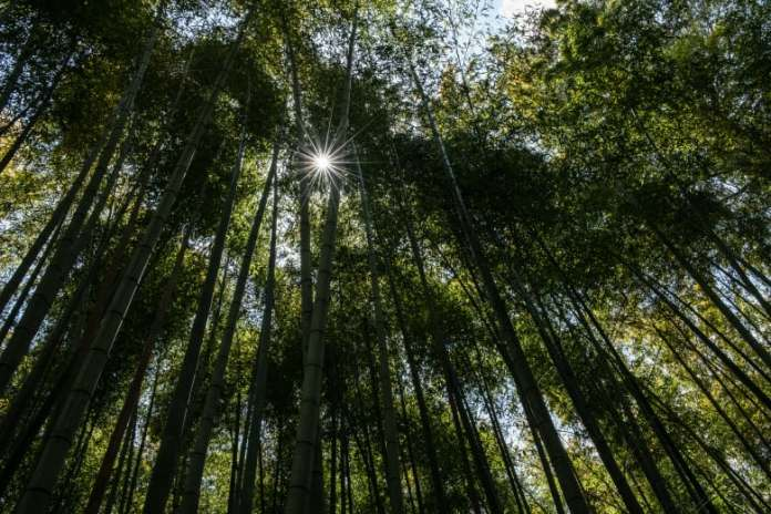 It may lower your energy bill..this is what makes clear wood better than glass