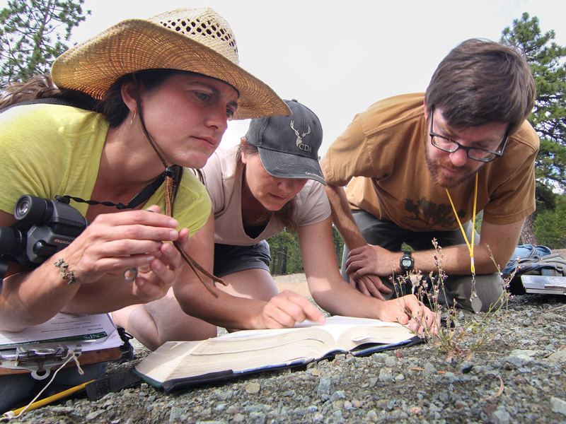 Rare Plant Treasure Hunters study streptanthus breweri