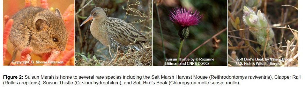 Species found at Suisun Marsh