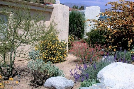 Why Garden With Native Plants California Native Plant Society