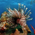 Grant aids efforts to fight lionfish