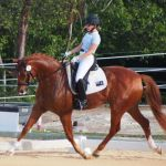 Cayman's dressage riders impress US judge