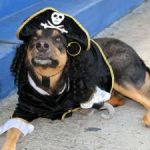 Pirate pooches prepare to parade