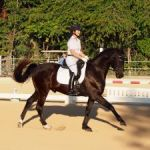 Riders put on show at dressage event