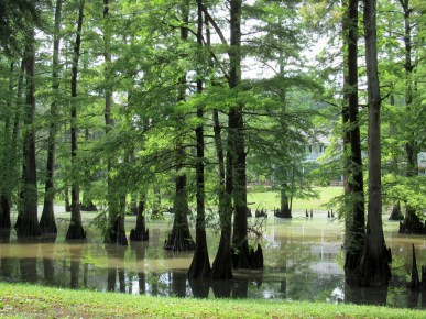 A swamp near Greenwood, Mississippi. (CNS/Patricia Zapor)