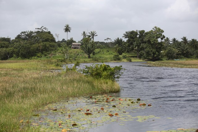Lilly pads float in mid-March along Pomeroon River in the interior of Guyana. (CNS photo/Bob Roller)